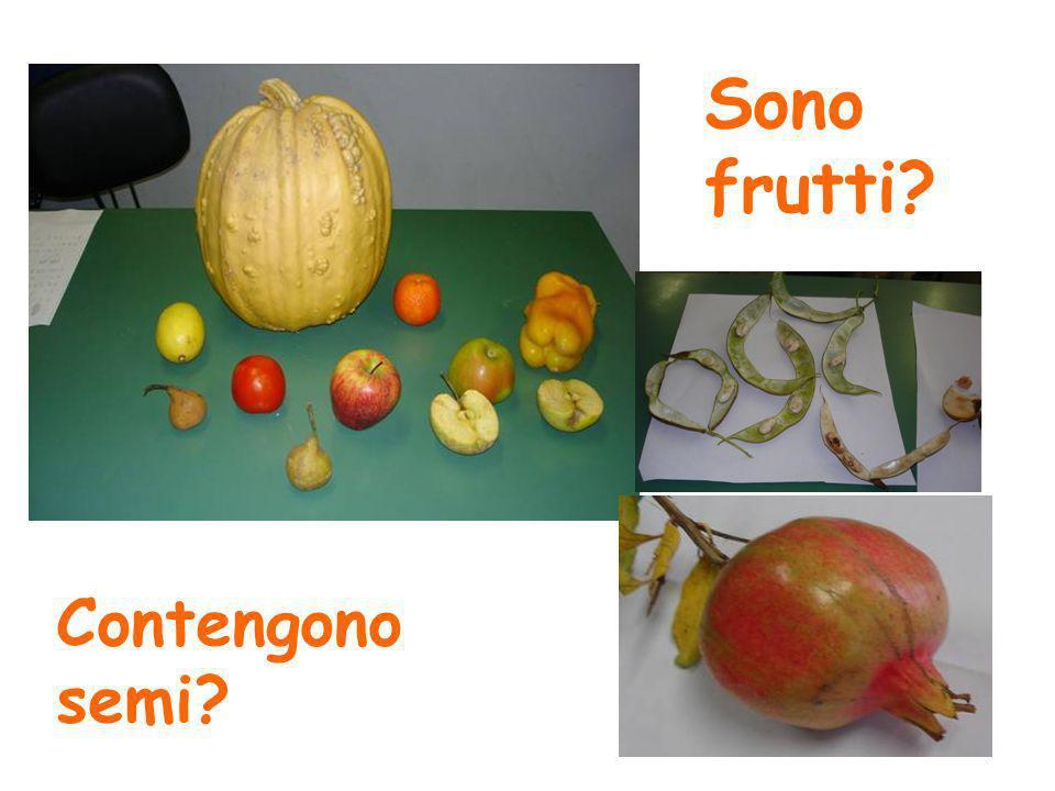 Sono frutti? Contengono semi?