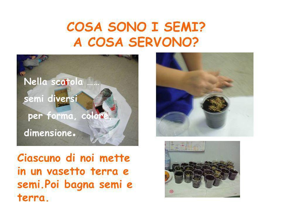 COSA SONO I SEMI? A COSA SERVONO? Nella scatola …… semi diversi per forma, colore, dimensione. Ciascuno di noi mette in un vasetto terra e semi.Poi ba