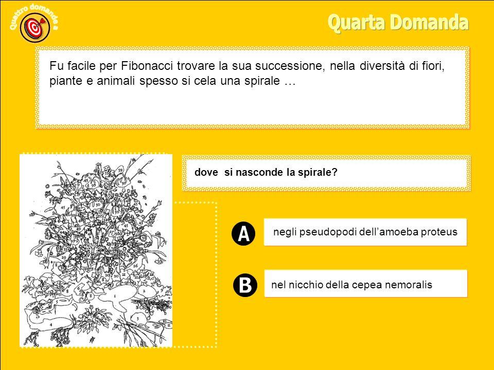 Ellisse Cerchio Spirale Quale figura nasconde la serie di Fibonacci.