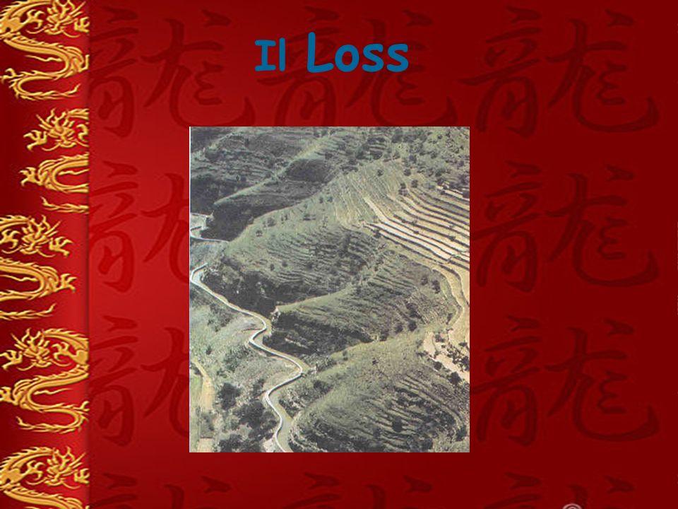 Il Loss