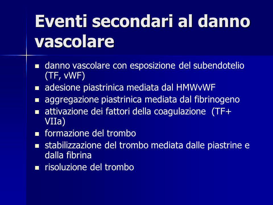 Eventi secondari al danno vascolare danno vascolare con esposizione del subendotelio (TF, vWF) adesione piastrinica mediata dal HMWvWF aggregazione pi