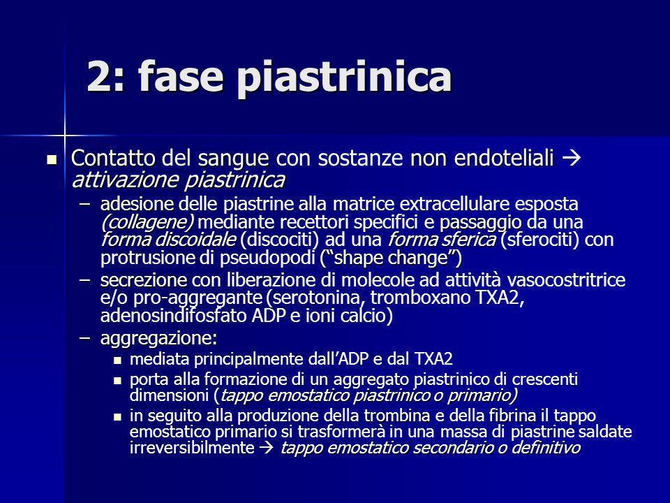 2: fase piastrinica Contatto sangue non endoteliali attivazione piastrinica Contatto del sangue con sostanze non endoteliali attivazione piastrinica –