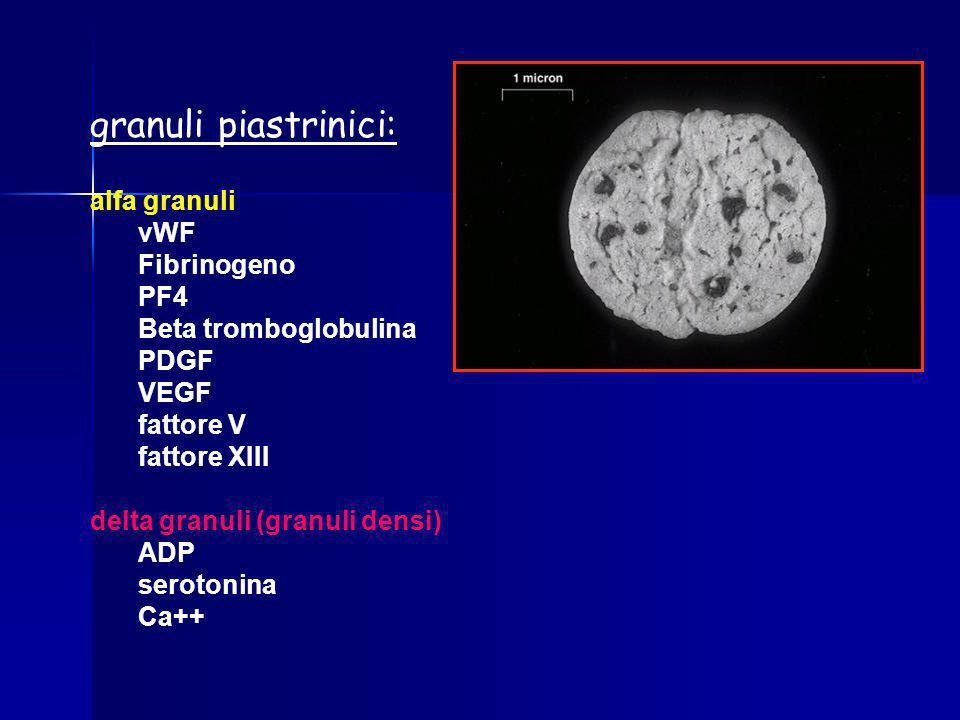 granuli piastrinici: alfa granuli vWF Fibrinogeno PF4 Beta tromboglobulina PDGF VEGF fattore V fattore XIII delta granuli (granuli densi) ADP serotoni