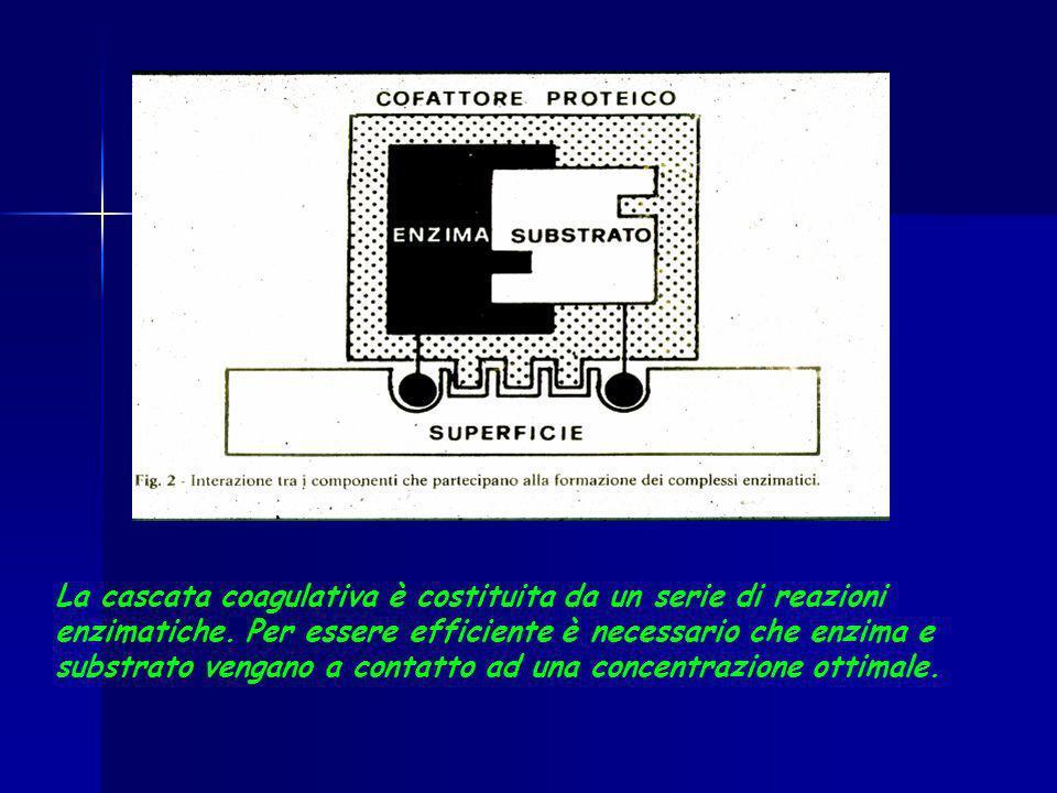 La cascata coagulativa è costituita da un serie di reazioni enzimatiche. Per essere efficiente è necessario che enzima e substrato vengano a contatto