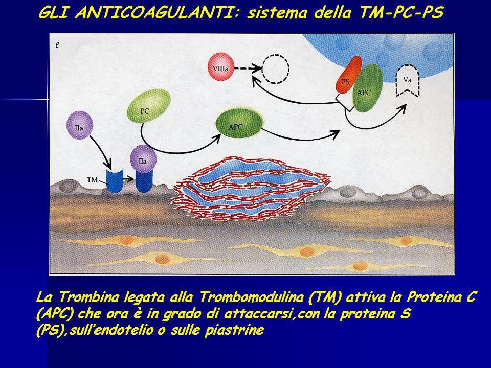 GLI ANTICOAGULANTI: sistema della TM-PC-PS La Trombina legata alla Trombomodulina (TM) attiva la Proteina C (APC) che ora è in grado di attaccarsi,con