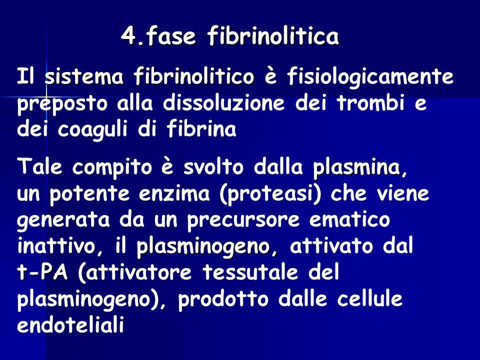 4.fase fibrinolitica sistema fibrinolitico Il sistema fibrinolitico è fisiologicamente preposto alla dissoluzione dei trombi e dei coaguli di fibrina