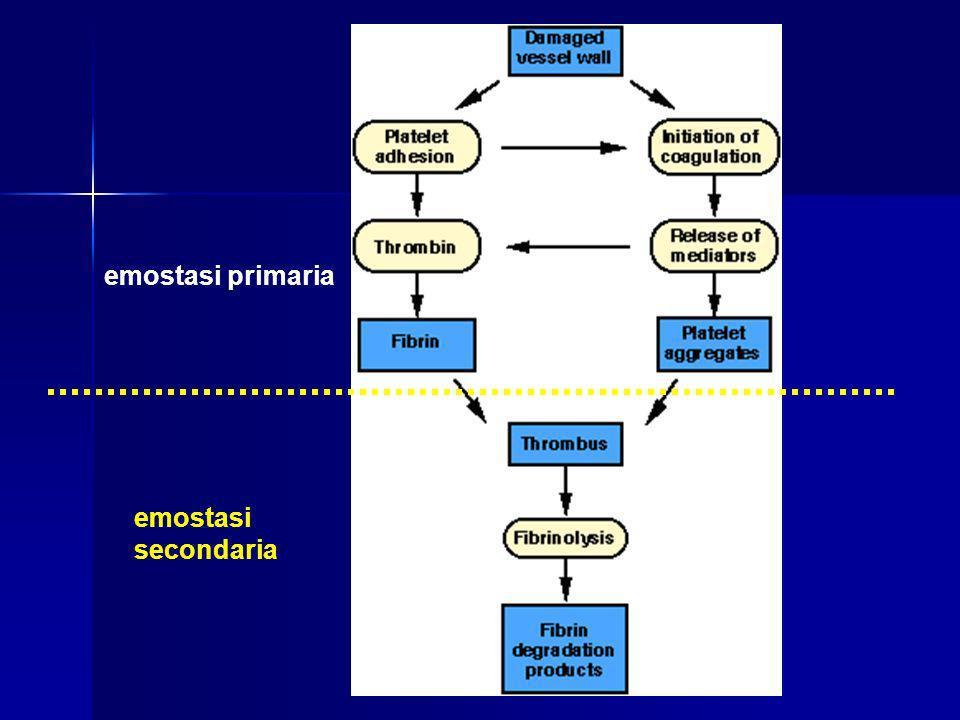 1: fase vascolare - - vasocostrizione reattiva transitorio Lesione vasale vasocostrizione reattiva (riduzione il flusso ematico) fenomeno transitorio  riflesso nervoso;  secrezione da parte delle cellule endoteliali di fattori endotelina; matrice sottoendoteliale favorisce il contatto del sangue con la matrice sottoendoteliale esposta dalla perdita di cellule endoteliali  aderire le piastrineattivare la cascata della coagulazione la matrice contiene proteine (in particolare collagene, proteoglicani e fibronectina) capaci di fare aderire le piastrine ed attivare la cascata della coagulazione non viene valutata La fase vascolare non viene valutata in laboratorio