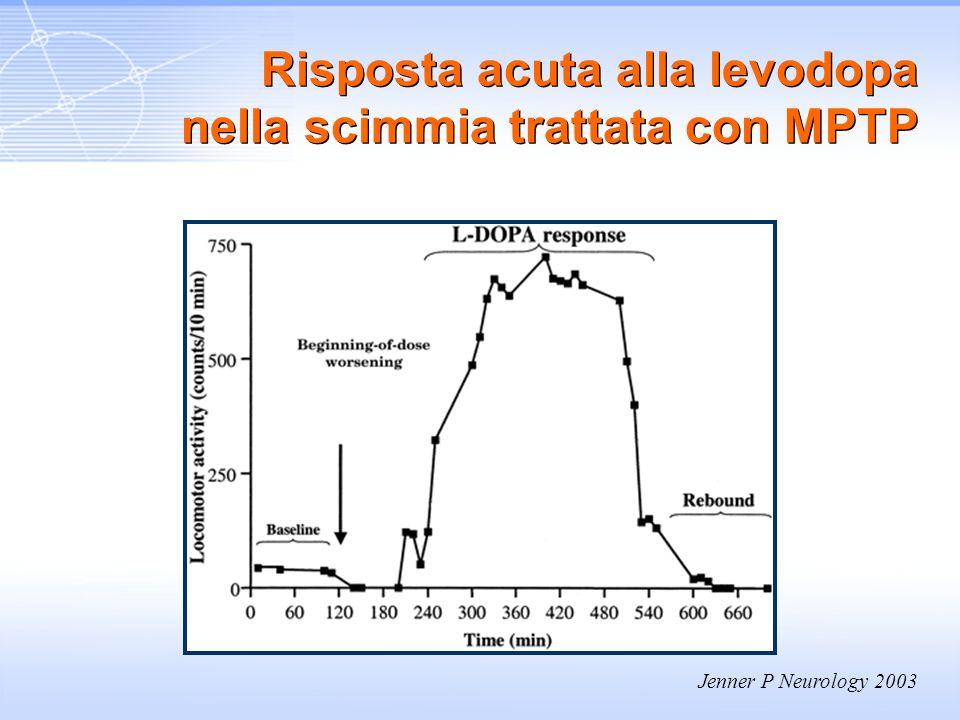 Jenner P Neurology 2003 Risposta acuta alla levodopa nella scimmia trattata con MPTP