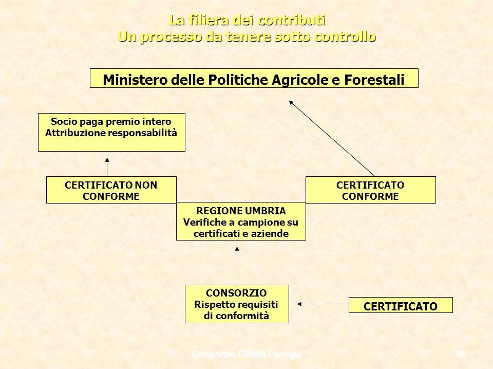 Consorzio Difesa Perugia6 La filiera dei contributi Un processo da tenere sotto controllo REGIONE UMBRIA Verifiche a campione su certificati e aziende