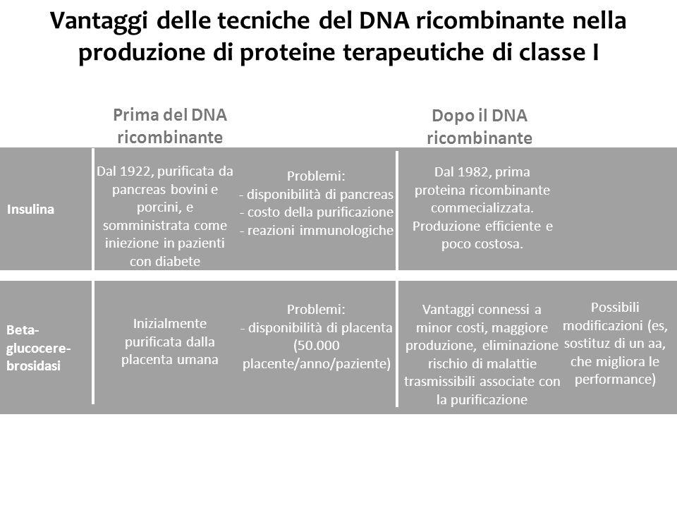 Vantaggi delle tecniche del DNA ricombinante nella produzione di proteine terapeutiche di classe I Insulina Beta- glucocere- brosidasi Dal 1922, purif