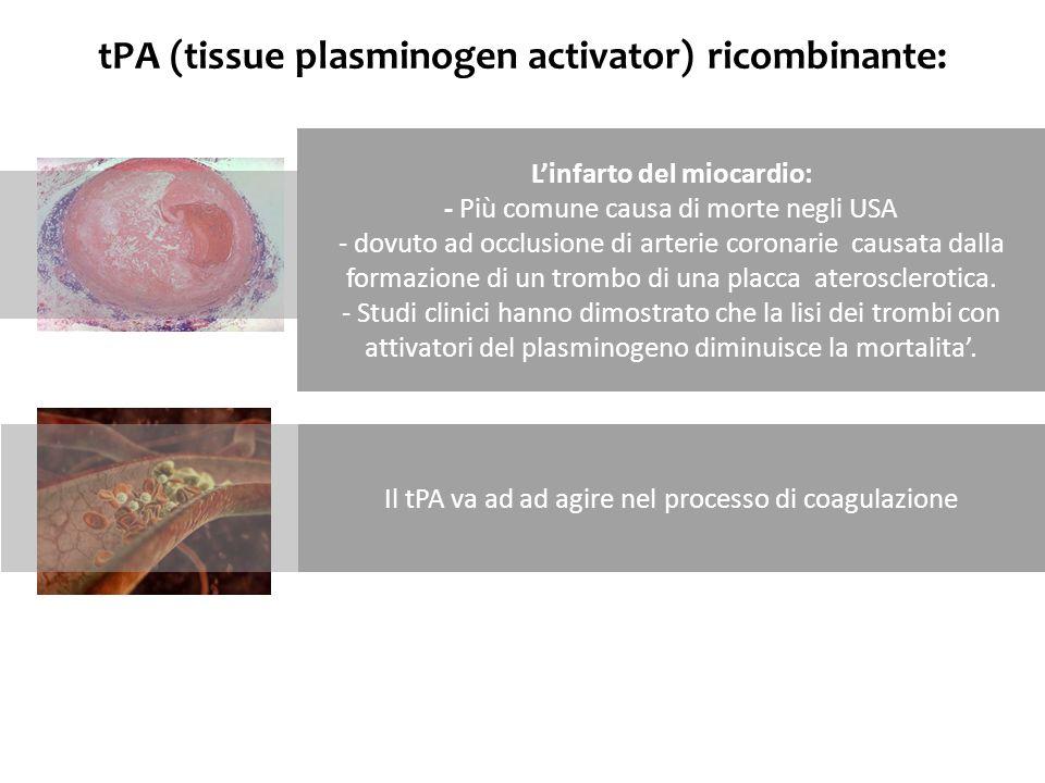 tPA (tissue plasminogen activator) ricombinante: Linfarto del miocardio: - Più comune causa di morte negli USA - dovuto ad occlusione di arterie coron