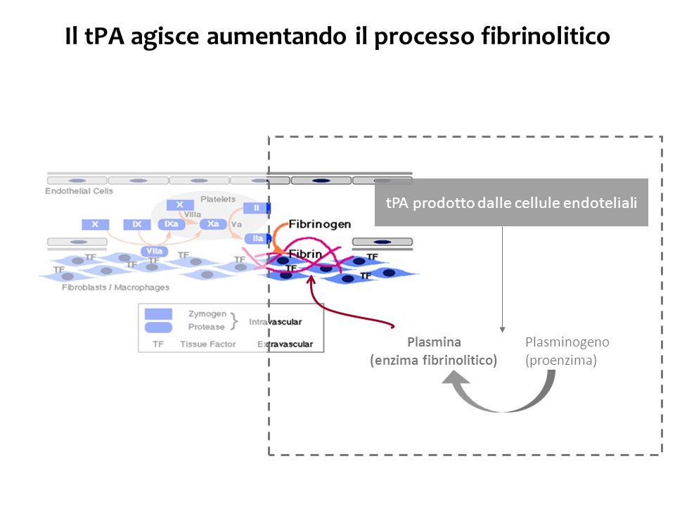 Il tPA agisce aumentando il processo fibrinolitico tPA prodotto dalle cellule endoteliali Plasminogeno (proenzima) Plasmina (enzima fibrinolitico)
