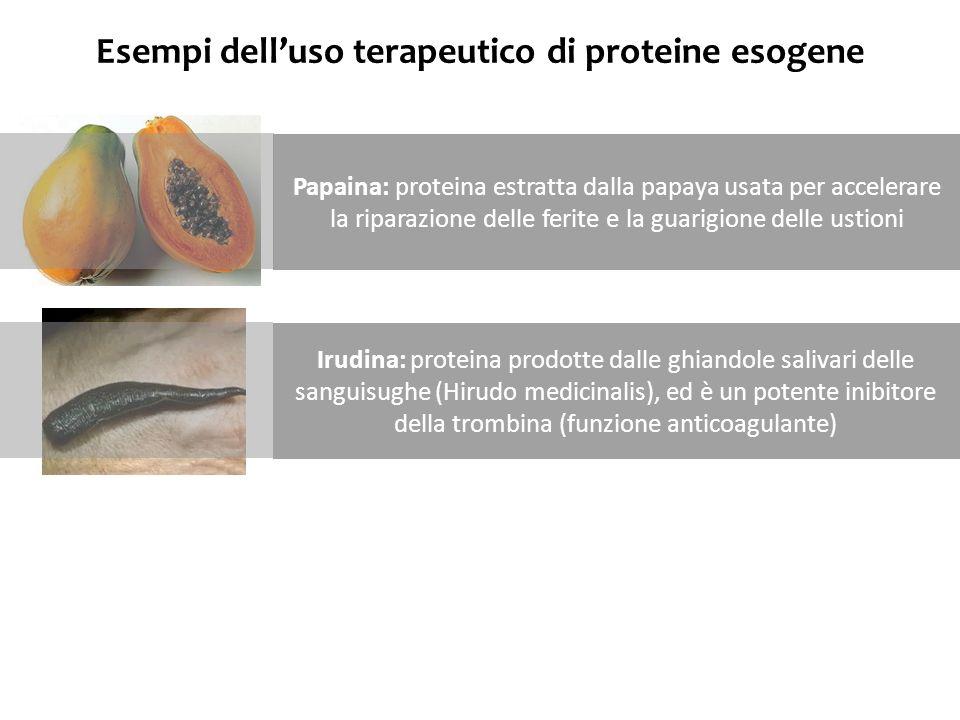Esempi delluso terapeutico di proteine esogene Papaina: proteina estratta dalla papaya usata per accelerare la riparazione delle ferite e la guarigion