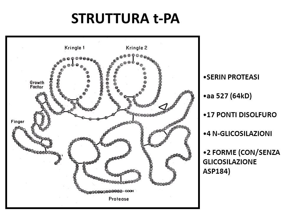 STRUTTURA t-PA SERIN PROTEASI aa 527 (64kD) 17 PONTI DISOLFURO 4 N-GLICOSILAZIONI 2 FORME (CON/SENZA GLICOSILAZIONE ASP184)