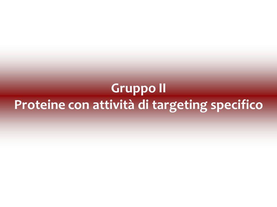 Gruppo II Proteine con attività di targeting specifico