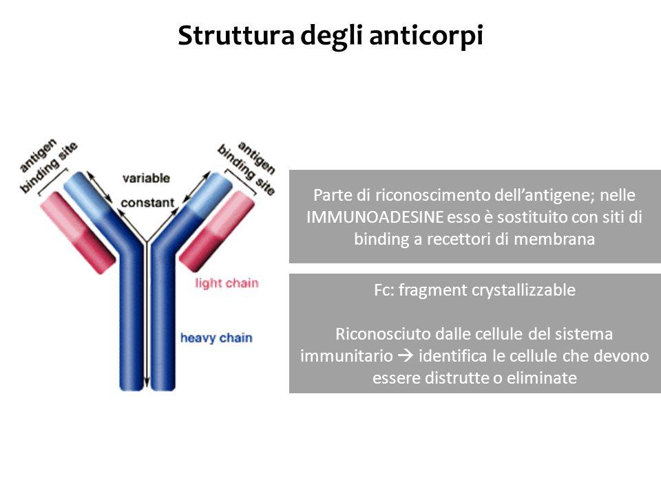 Struttura degli anticorpi Parte di riconoscimento dellantigene; nelle IMMUNOADESINE esso è sostituito con siti di binding a recettori di membrana Fc: