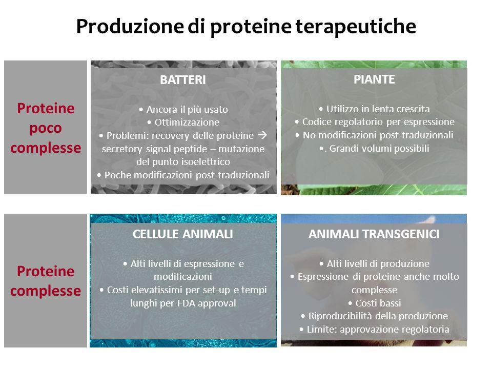 Classificazione funzionale delle proteine terapeutiche Gruppo I Gruppo II Gruppo III Gruppo IV Proteine con attività enzimatica o regolatoria Proteine con attività di targeting specifico Vaccini proteici Proteine diagnostiche