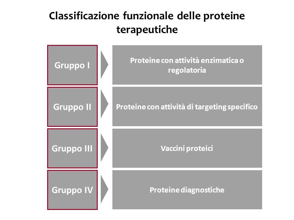 Classificazione funzionale delle proteine terapeutiche Gruppo I Gruppo II Gruppo III Gruppo IV Proteine con attività enzimatica o regolatoria Proteine