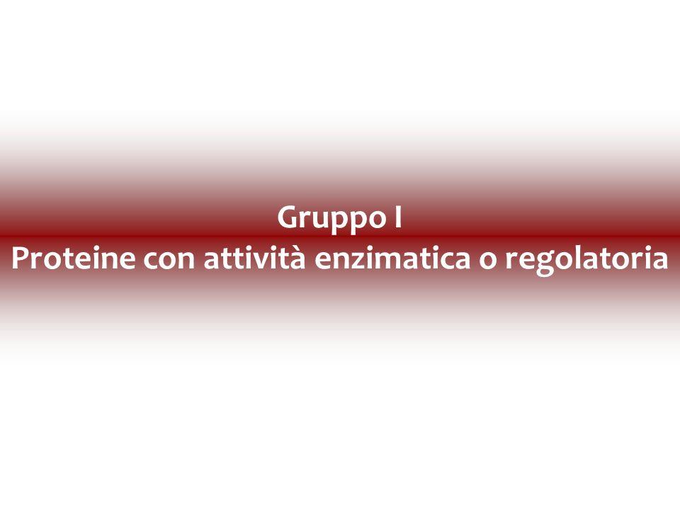 Gruppo I Proteine con attività enzimatica o regolatoria