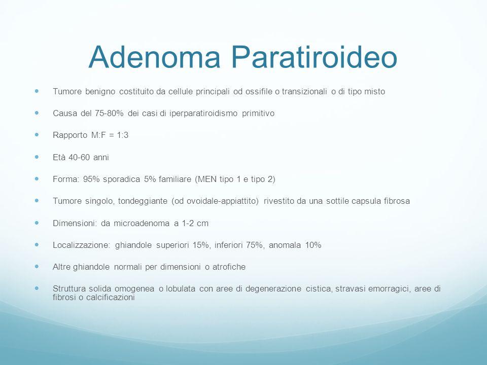 Adenoma Paratiroideo Tumore benigno costituito da cellule principali od ossifile o transizionali o di tipo misto Causa del 75-80% dei casi di iperparatiroidismo primitivo Rapporto M:F = 1:3 Età 40-60 anni Forma: 95% sporadica 5% familiare (MEN tipo 1 e tipo 2) Tumore singolo, tondeggiante (od ovoidale-appiattito) rivestito da una sottile capsula fibrosa Dimensioni: da microadenoma a 1-2 cm Localizzazione: ghiandole superiori 15%, inferiori 75%, anomala 10% Altre ghiandole normali per dimensioni o atrofiche Struttura solida omogenea o lobulata con aree di degenerazione cistica, stravasi emorragici, aree di fibrosi o calcificazioni