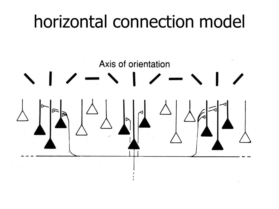 horizontal connection model