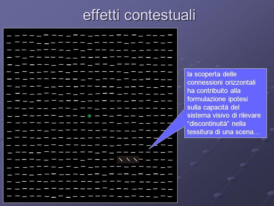effetti contestuali la scoperta delle connessioni orizzontali ha contribuito alla formulazione ipotesi sulla capacità del sistema visivo di rilevare d
