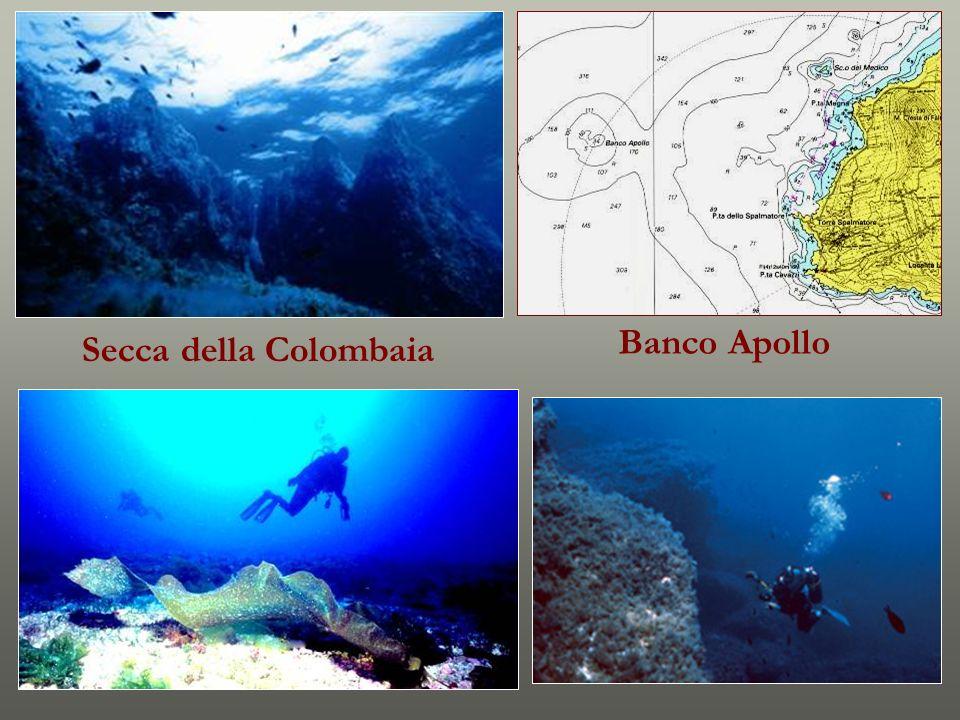 Banco Apollo Secca della Colombaia