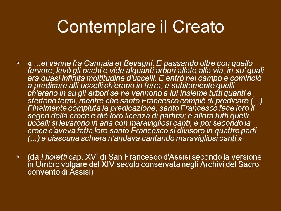 Contemplare il Creato «...et venne fra Cannaia et Bevagni.