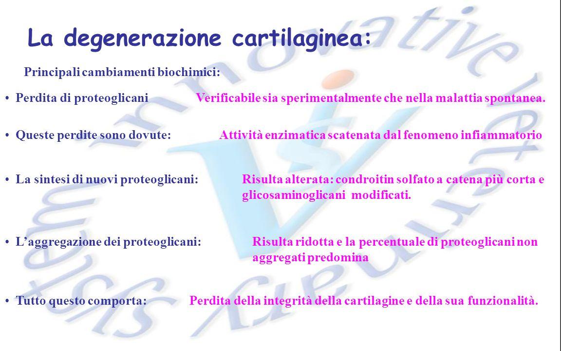 La degenerazione cartilaginea: Principali cambiamenti biochimici: Perdita di proteoglicani Queste perdite sono dovute: La sintesi di nuovi proteoglicani: Tutto questo comporta: Verificabile sia sperimentalmente che nella malattia spontanea.