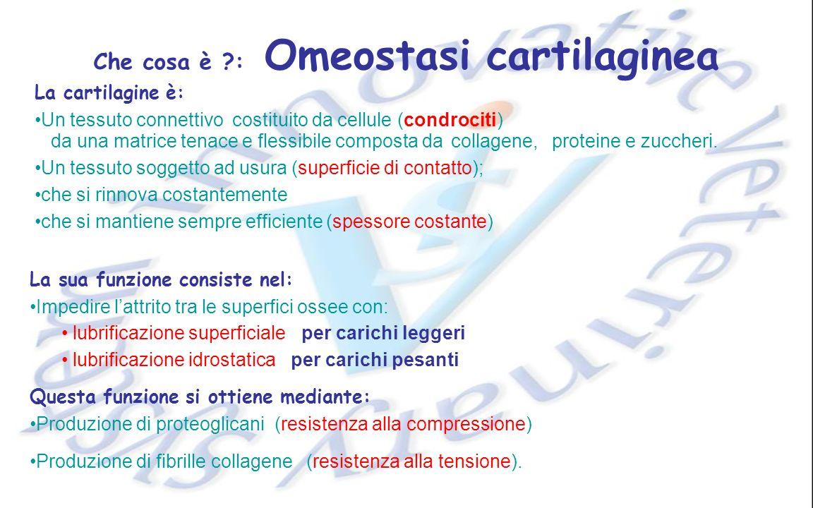 Che cosa è ?: Omeostasi cartilaginea Produzione di fibrille collagene La cartilagine è: Un tessuto soggetto ad usura (superficie di contatto); che si