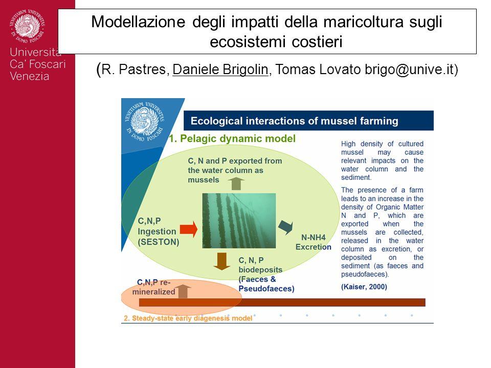 Modellazione degli impatti della maricoltura sugli ecosistemi costieri ( R. Pastres, Daniele Brigolin, Tomas Lovato brigo@unive.it)