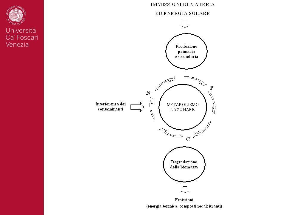 Chimica Ecologia Ecotossicologia Fisica dei processi trasporto Microbiologia Linterazione tra esperti delle diverse discipline consente di formulare modelli concettuali ….