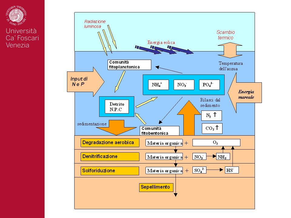 Facoltà di Scienze MM.FF.NN.27 Ricostruzioni paleoclimatiche ed ambientali nel corso dellultimo milione di anni (C.