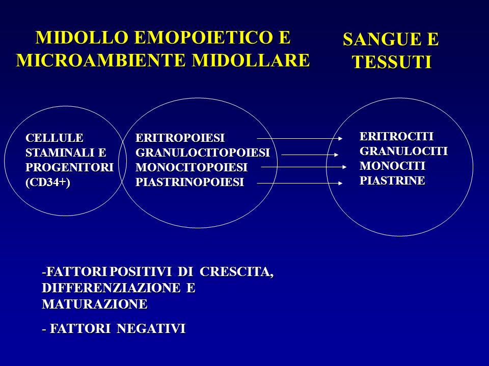 MIDOLLO EMOPOIETICO E MICROAMBIENTE MIDOLLARE SANGUE E TESSUTI CELLULE STAMINALI E PROGENITORI (CD34+) ERITROPOIESI GRANULOCITOPOIESI MONOCITOPOIESI P