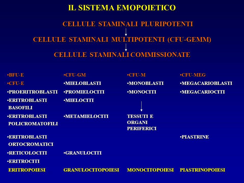 IL SISTEMA EMOPOIETICO CELLULE STAMINALI MULTIPOTENTI (CFU-GEMM) CELLULE STAMINALI COMMISSIONATE BFU-EBFU-E CFU-GMCFU-GM CFU-MCFU-M CFU-MEGCFU-MEG CFU