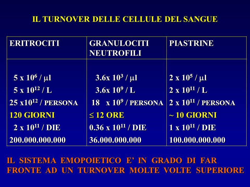 IL TURNOVER DELLE CELLULE DEL SANGUE ERITROCITI GRANULOCITI NEUTROFILI PIASTRINE 5 x 10 6 / l 5 x 10 6 / l 3.6x 10 3 / l 3.6x 10 3 / l 2 x 10 5 / l 5