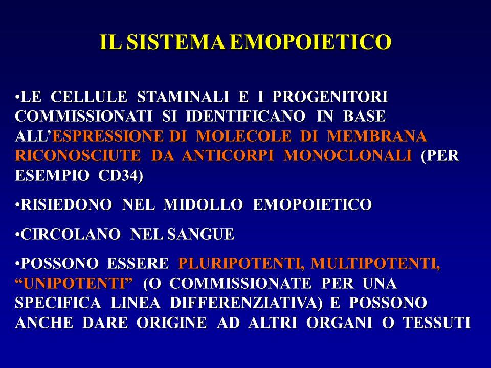 IL SISTEMA EMOPOIETICO LE CELLULE STAMINALI E I PROGENITORI COMMISSIONATI SI IDENTIFICANO IN BASE ALLESPRESSIONE DI MOLECOLE DI MEMBRANA RICONOSCIUTE
