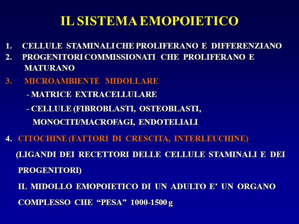 IL SISTEMA EMOPOIETICO 1. CELLULE STAMINALI CHE PROLIFERANO E DIFFERENZIANO 2. PROGENITORI COMMISSIONATI CHE PROLIFERANO E MATURANO 3.MICROAMBIENTE MI