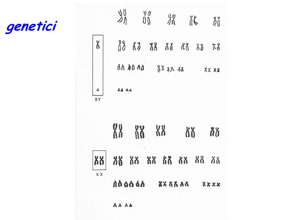 FATTORI GENETICI DI CRESCITA 1.Gruppo etnico Incide maggiormente sulle dimensioni e caratteristiche finali che sulle modalità di crescita 2.