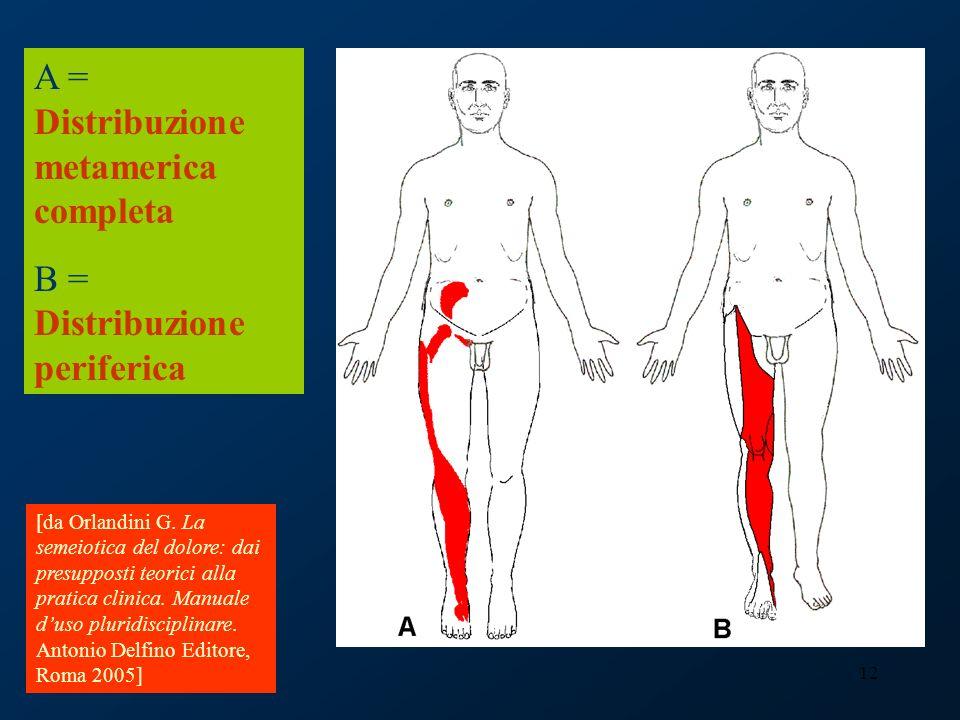 12 A = Distribuzione metamerica completa B = Distribuzione periferica [da Orlandini G. La semeiotica del dolore: dai presupposti teorici alla pratica