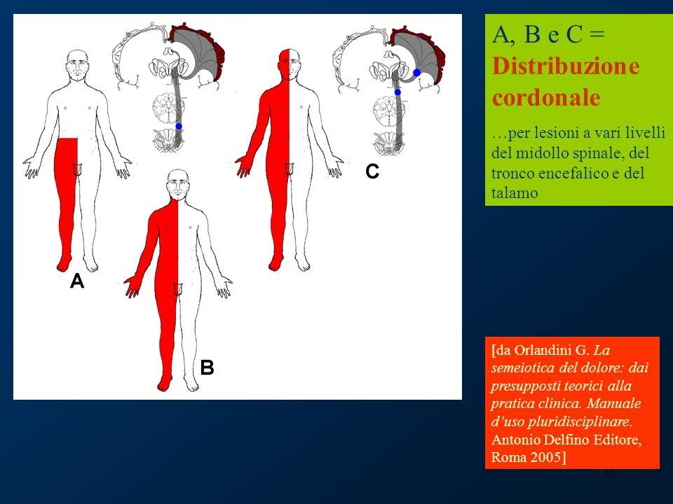 13 A, B e C = Distribuzione cordonale …per lesioni a vari livelli del midollo spinale, del tronco encefalico e del talamo [da Orlandini G. La semeioti