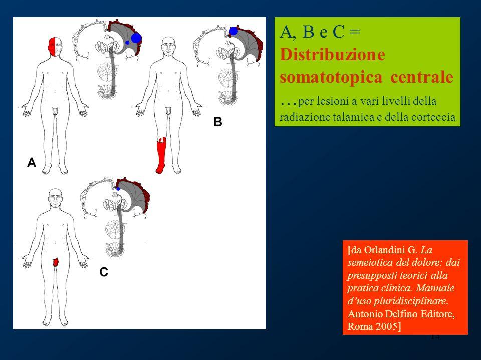 14 A, B e C = Distribuzione somatotopica centrale … per lesioni a vari livelli della radiazione talamica e della corteccia [da Orlandini G. La semeiot