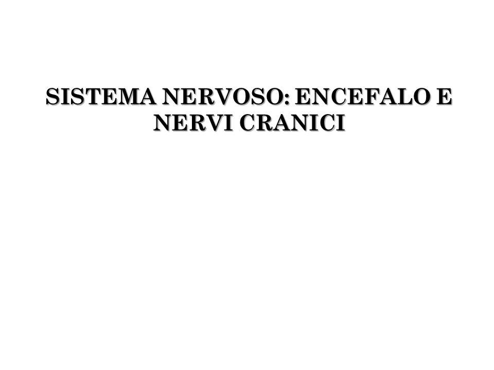 SISTEMA NERVOSO: ENCEFALO E NERVI CRANICI