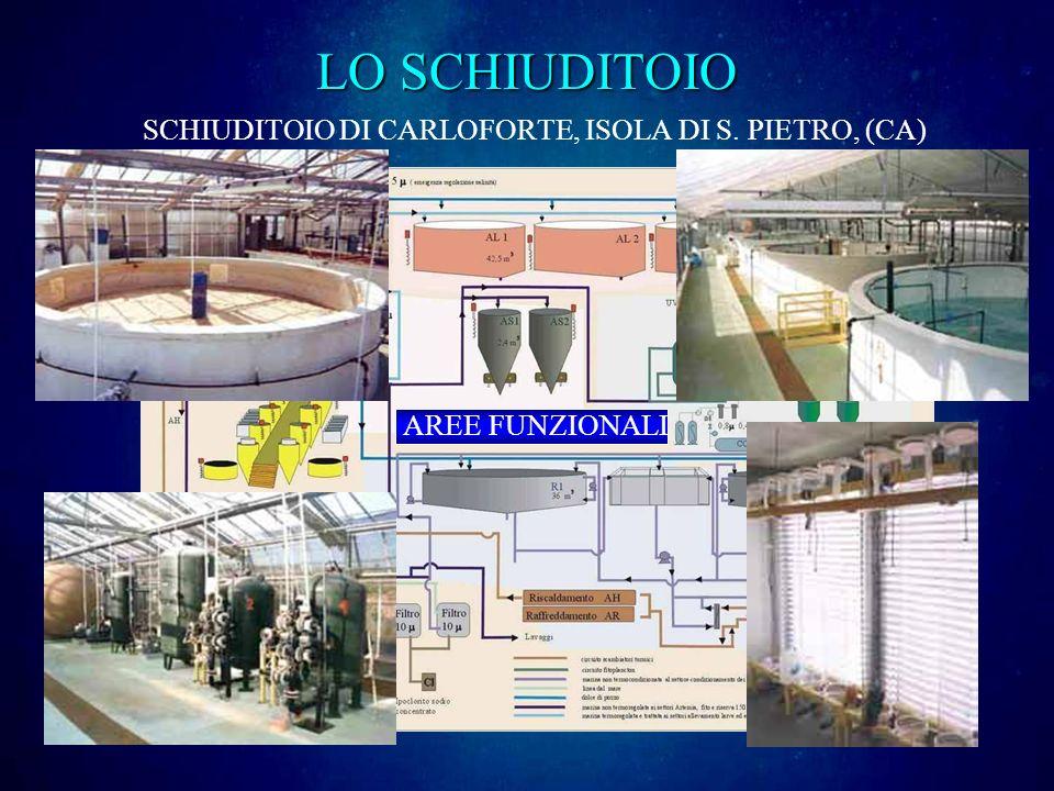 SCHIUDITOIO DI CARLOFORTE, ISOLA DI S. PIETRO, (CA) AREE FUNZIONALI