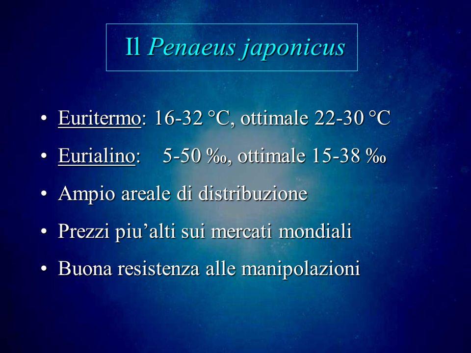 Il Penaeus japonicus Euritermo: 16-32 °C, ottimale 22-30 °CEuritermo: 16-32 °C, ottimale 22-30 °C Eurialino: 5-50, ottimale 15-38Eurialino: 5-50, ottimale 15-38 Ampio areale di distribuzioneAmpio areale di distribuzione Prezzi piualti sui mercati mondialiPrezzi piualti sui mercati mondiali Buona resistenza alle manipolazioniBuona resistenza alle manipolazioni