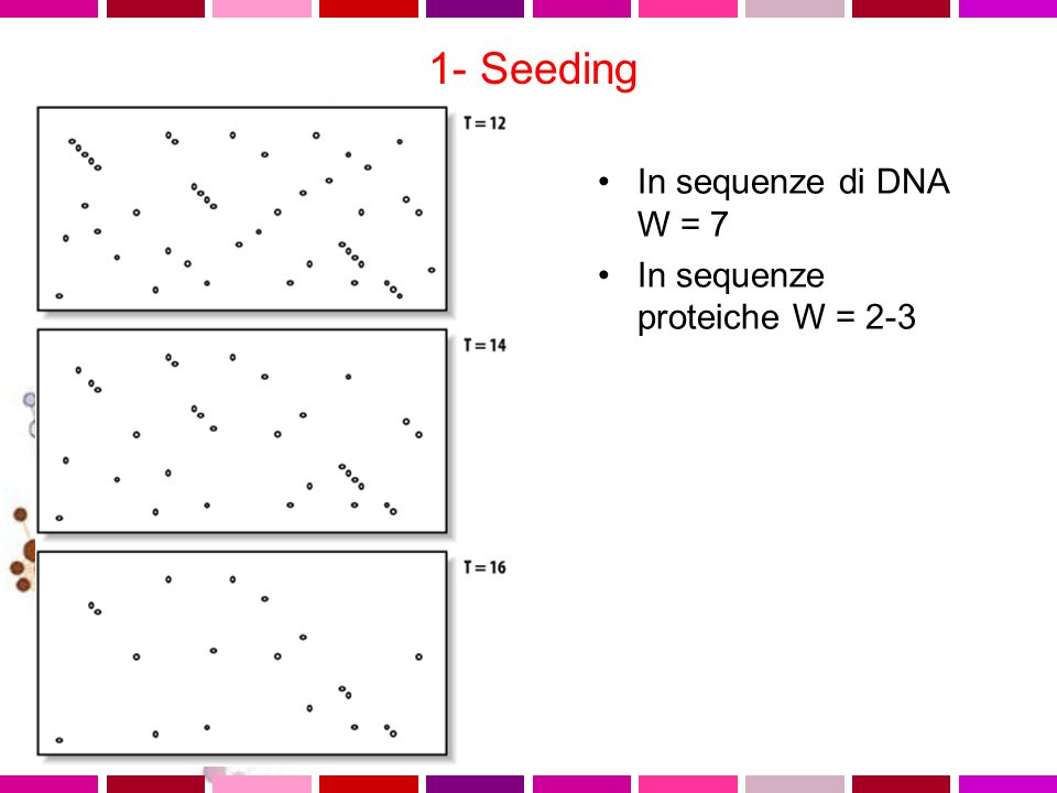 1- Seeding In sequenze di DNA W = 7 In sequenze proteiche W = 2-3