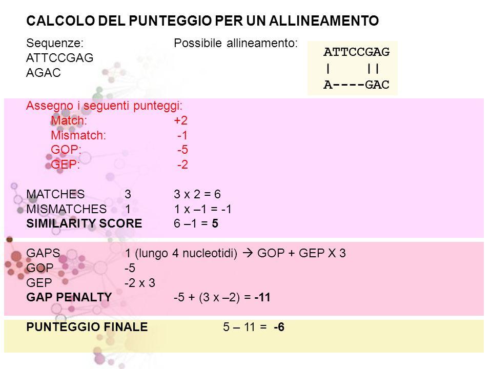 ATTCCGAG | || A----GAC CALCOLO DEL PUNTEGGIO PER UN ALLINEAMENTO Sequenze:Possibile allineamento: ATTCCGAG AGAC Assegno i seguenti punteggi: Match: +2