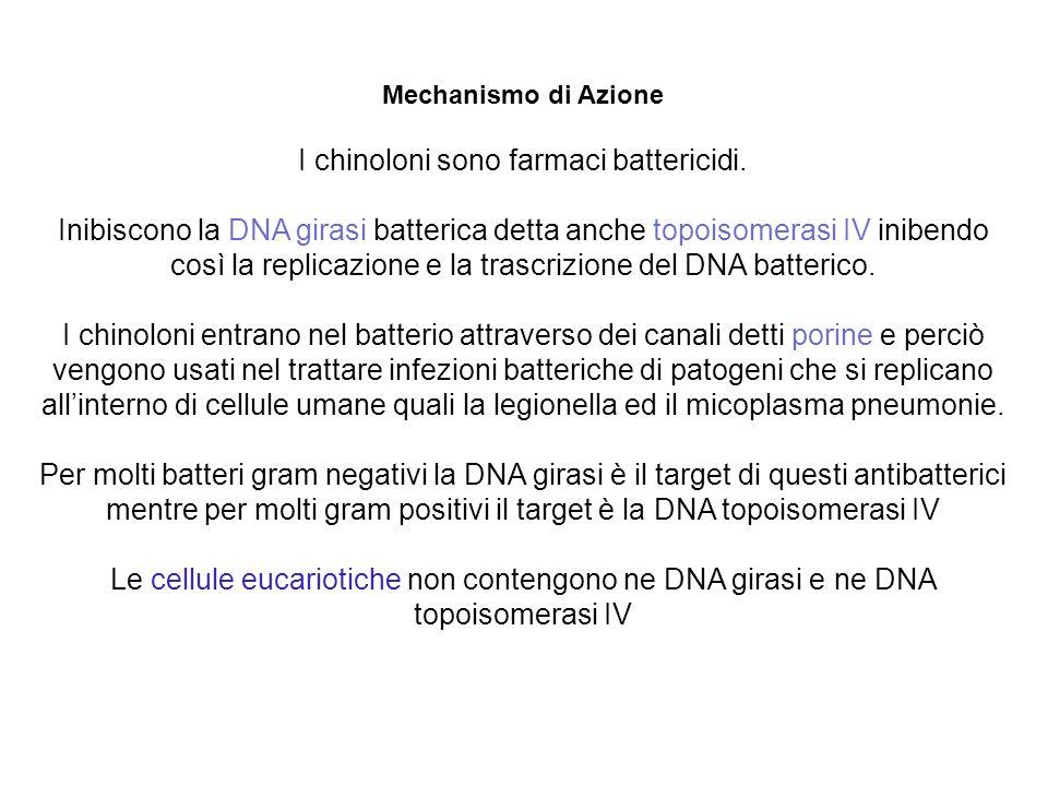 Mechanismo di Azione I chinoloni sono farmaci battericidi. Inibiscono la DNA girasi batterica detta anche topoisomerasi IV inibendo così la replicazio