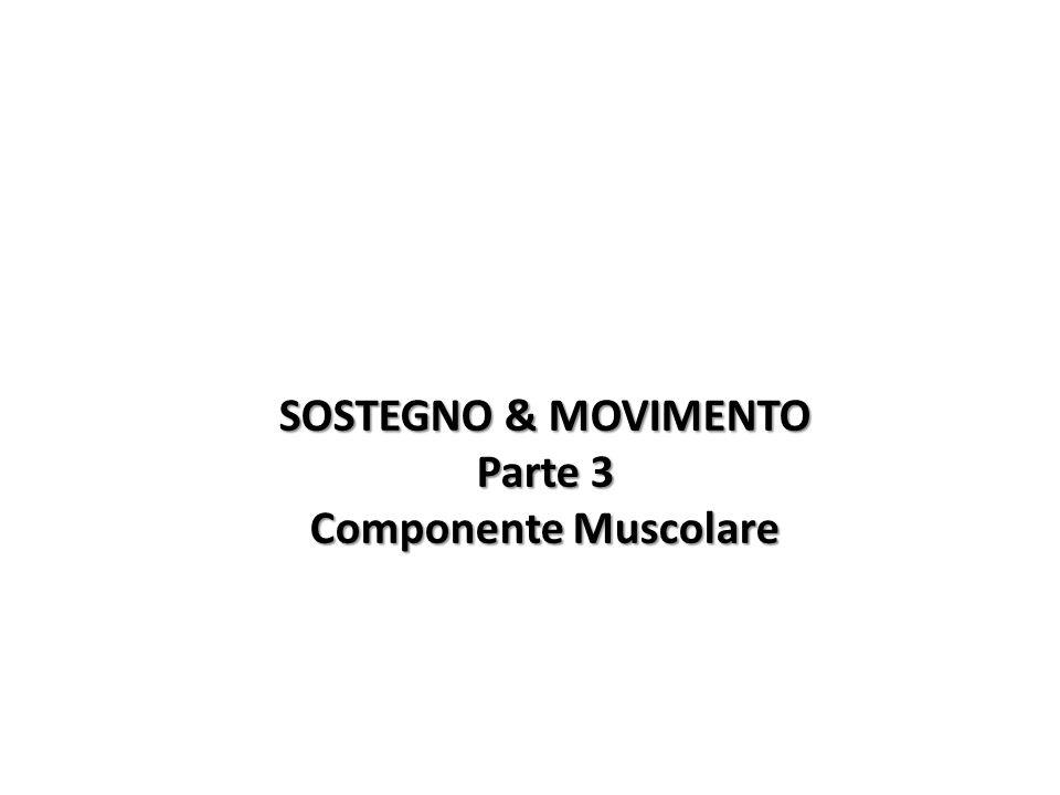 SOSTEGNO & MOVIMENTO Parte 3 Componente Muscolare