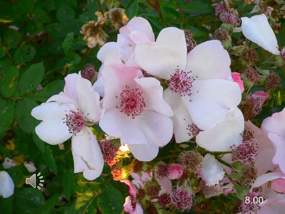 Preghiamo perché dappertutto si coltivi questo giardino, nella gioia di sentirsi tutti chiamati, nella varietà dei doni.
